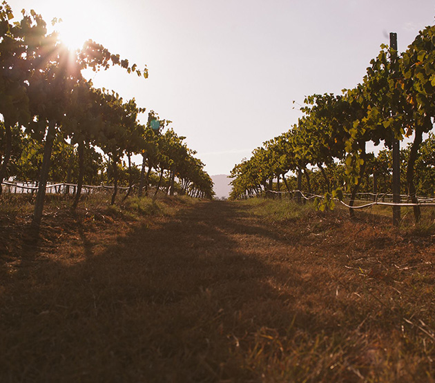 The Climate Atlas Predictions for the Wine Industry
